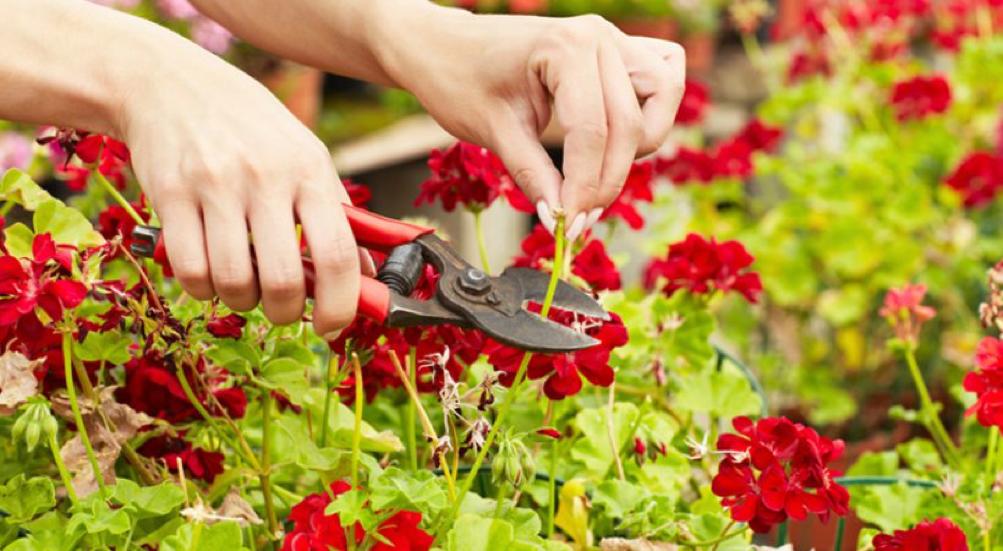 Come scegliere l'impresa di giardinaggio a Siena?