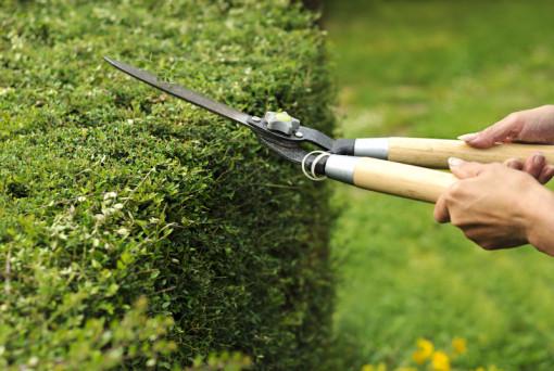 Come prendersi cura al meglio delle piante e degli alberi del giardino?
